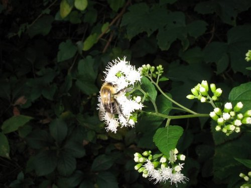 Bee In Autumn