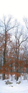 Good woods