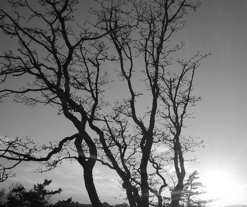 The Atmosphere of Trees