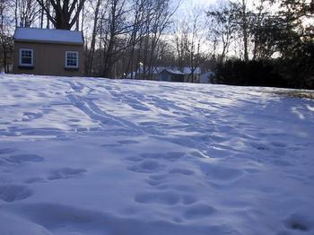 COld_Snow.jpg