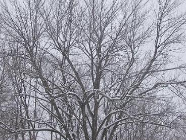SnowShrunk.jpg