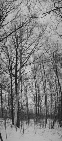 Birchesnearpond